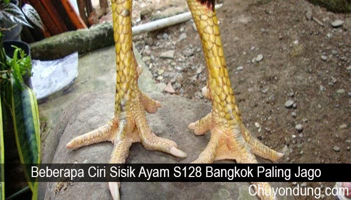 Beberapa Ciri Sisik Ayam S128 Bangkok Paling Jago