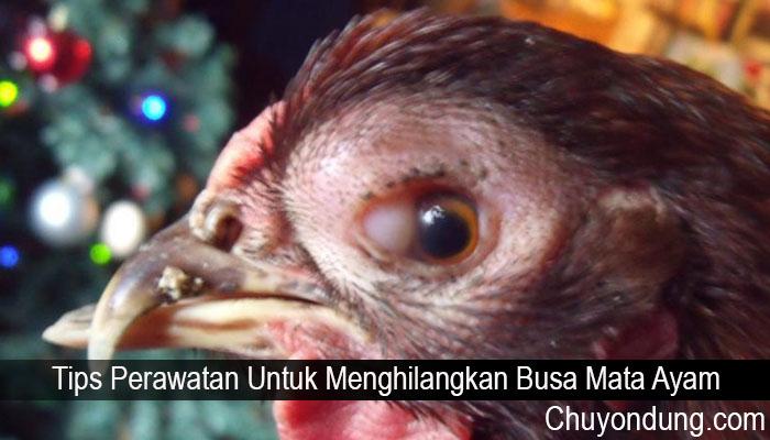 Tips Perawatan Untuk Menghilangkan Busa Mata Ayam